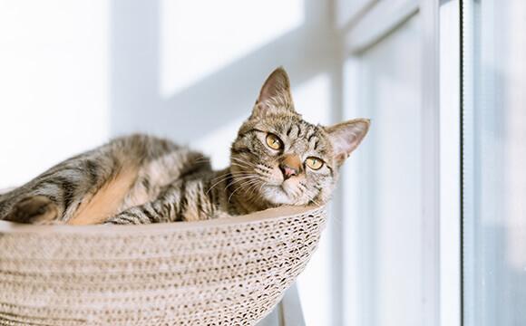 重要なこと-リラックスした猫の画像